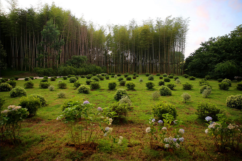 dendrological-park-bamboo-trees