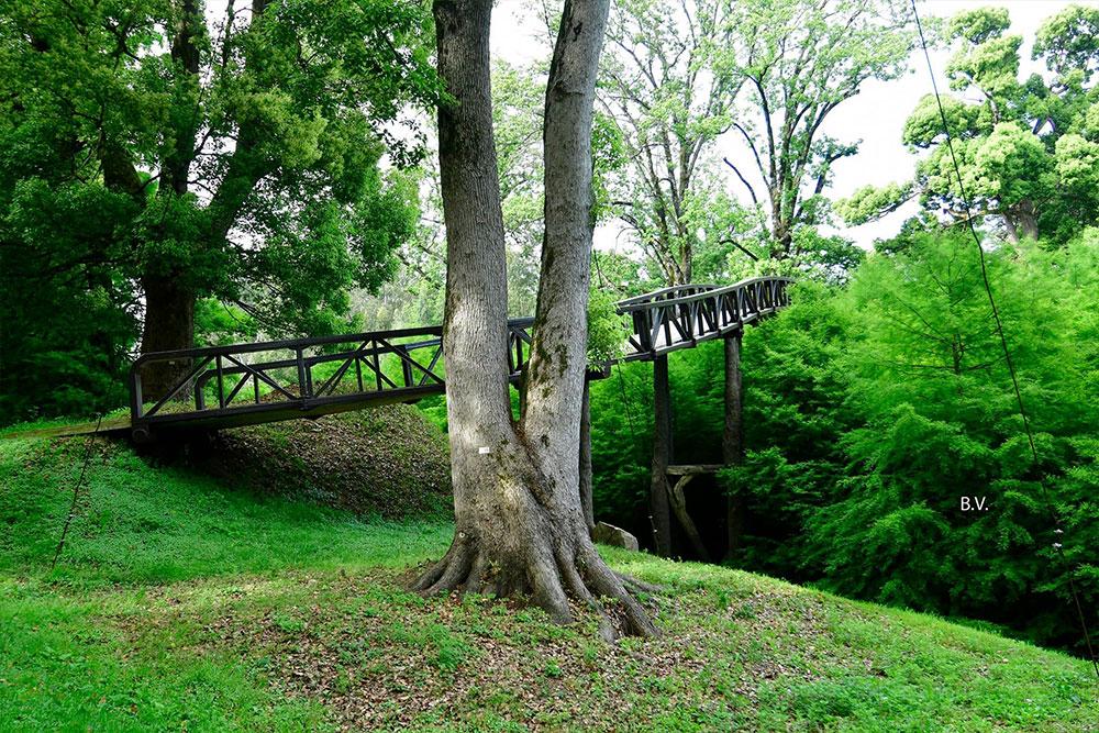 dendrological-park-bridge