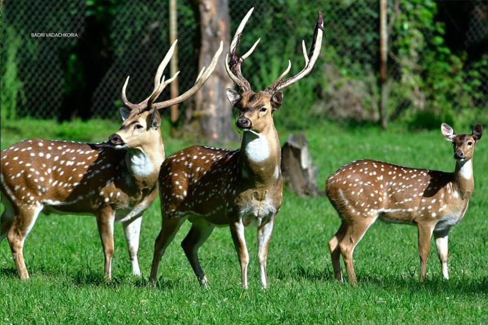 dendrological-park-deer