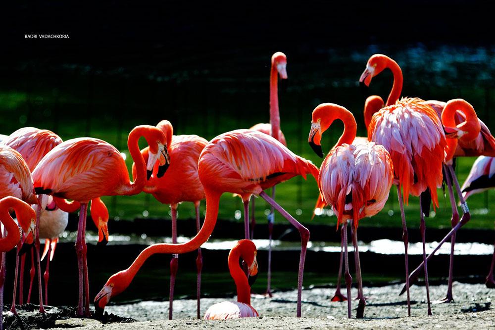 dendrological-park-flamingo