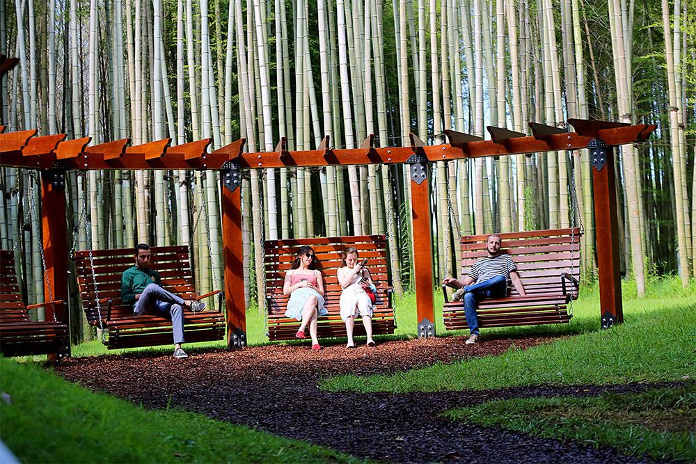 dendrological-park-tree